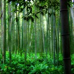 Lessons of the Chinese Bamboo for Matrix Masters